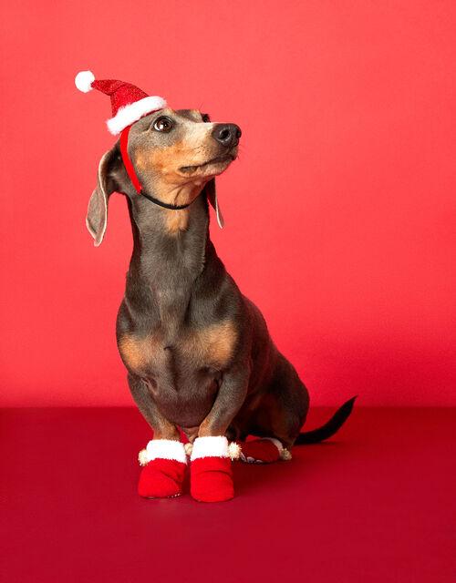 Santa Dog Booties, Red (RED), large
